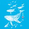 Tee-shirt Bio Le Champ des Baleines
